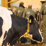Training bedrijfsanalyse in de veehouderij