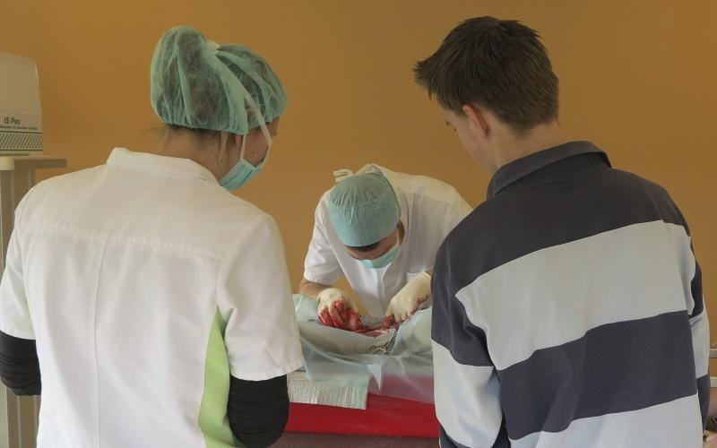 Veterinair praktijkonderwijs bij VKON